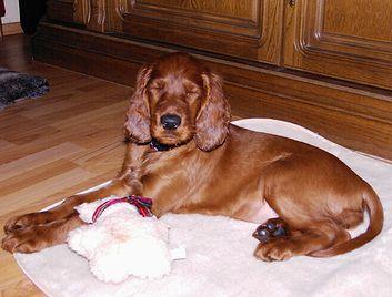 donna_puppy