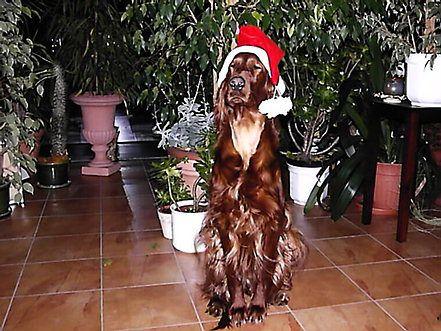 holly_weihnachtsbilder